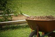 Wood Chips in wheelbarrow